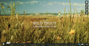 Wild Trout – A Montana Fish Story