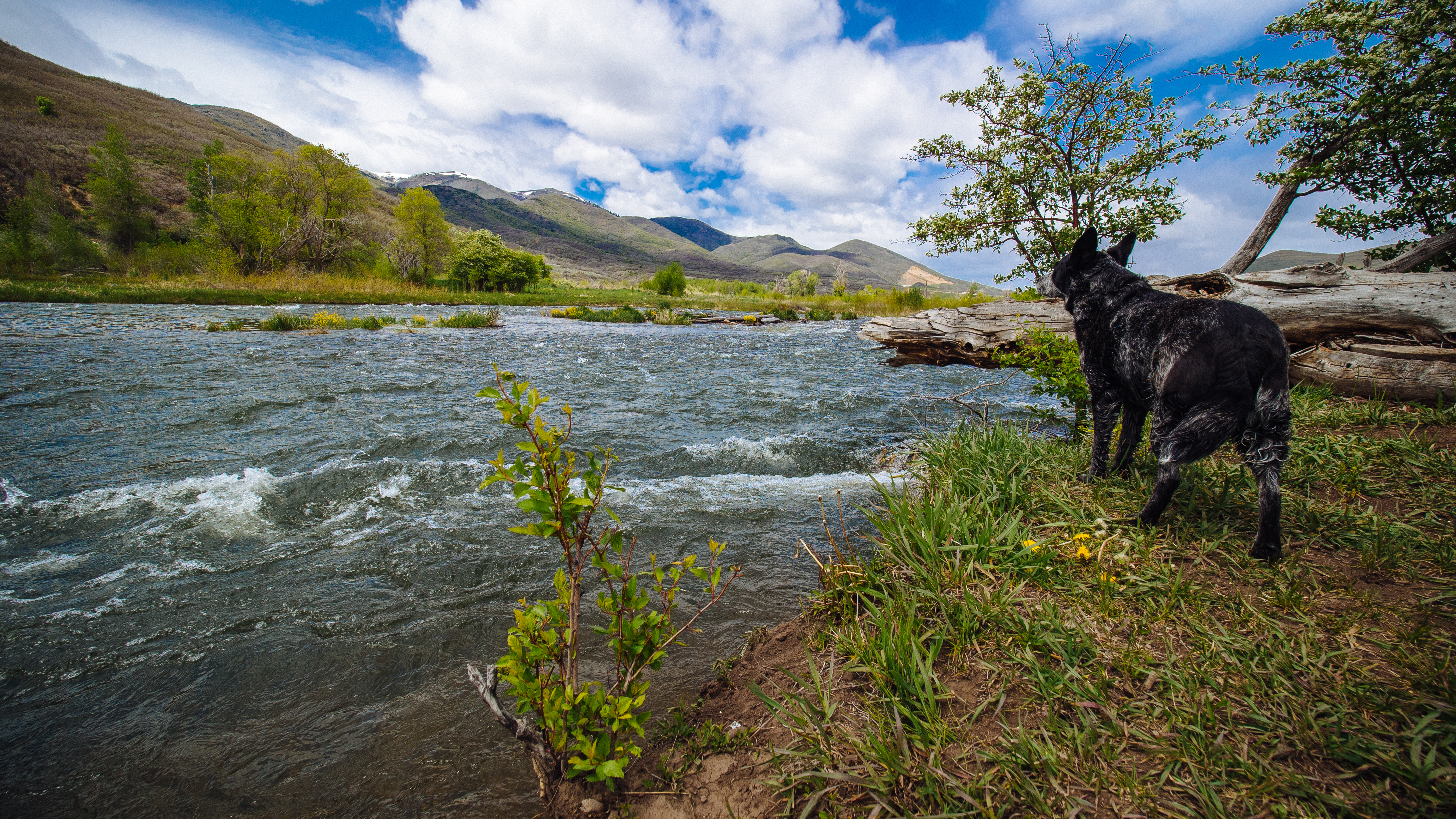Park City Fly Fishing Repor