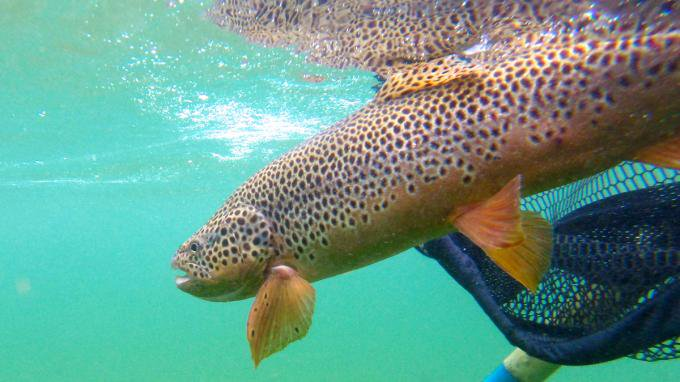 Keep em wet Park City Fly Fishing Guides